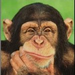 chimpances-inteligente