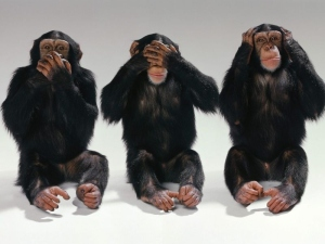 Chimpances-reacciones