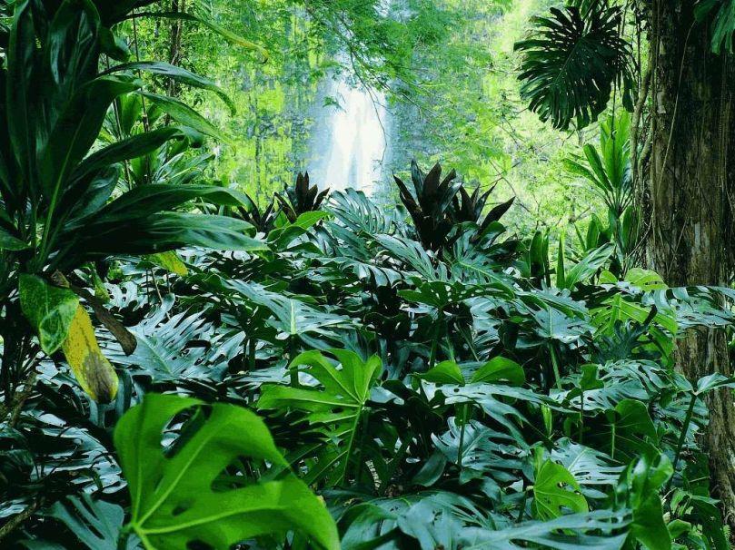 selva-abundancia