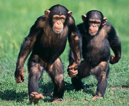 caminar-mico
