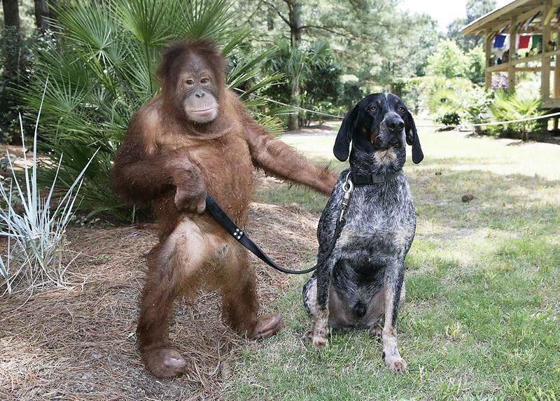 No hay que echarse el mico sino caminar con él.